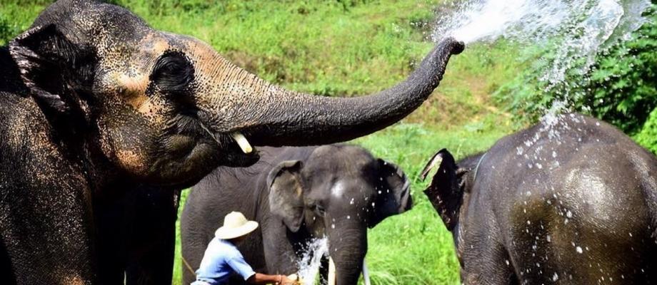 HALF DAY FEED & BATH ELEPHANT
