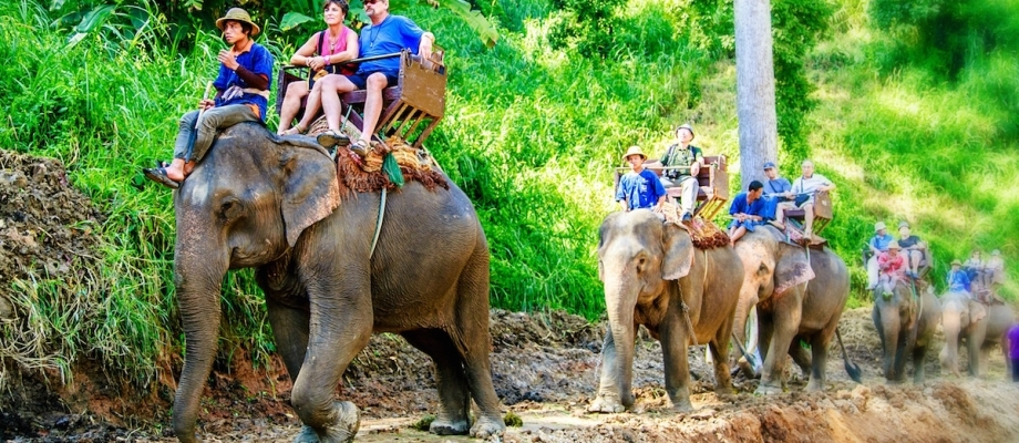 ONE DAY 19 PLATFORMS ZIPLINE WITH ELEPHANT AND BAMBOO RAFTING