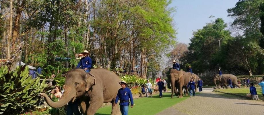 Half Day Thai Elephant Conservation Center